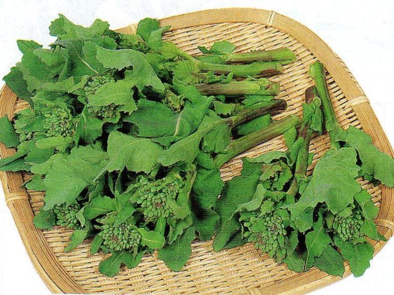 のらぼう菜種