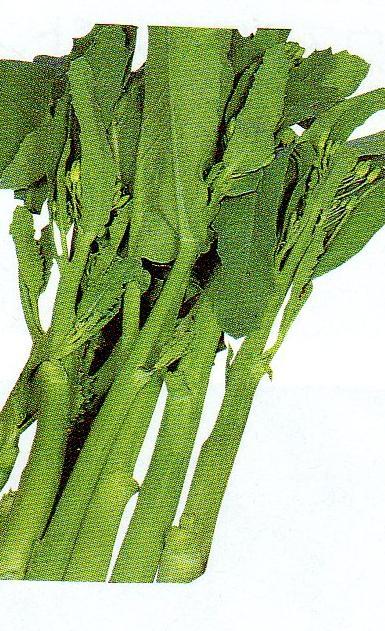 カイラン 種