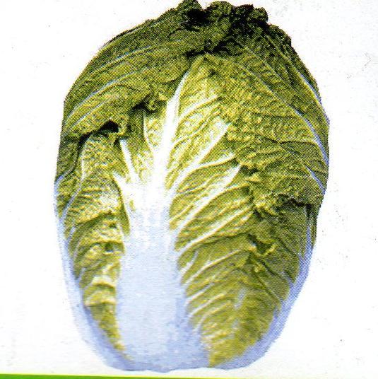 松島新2号白菜 種