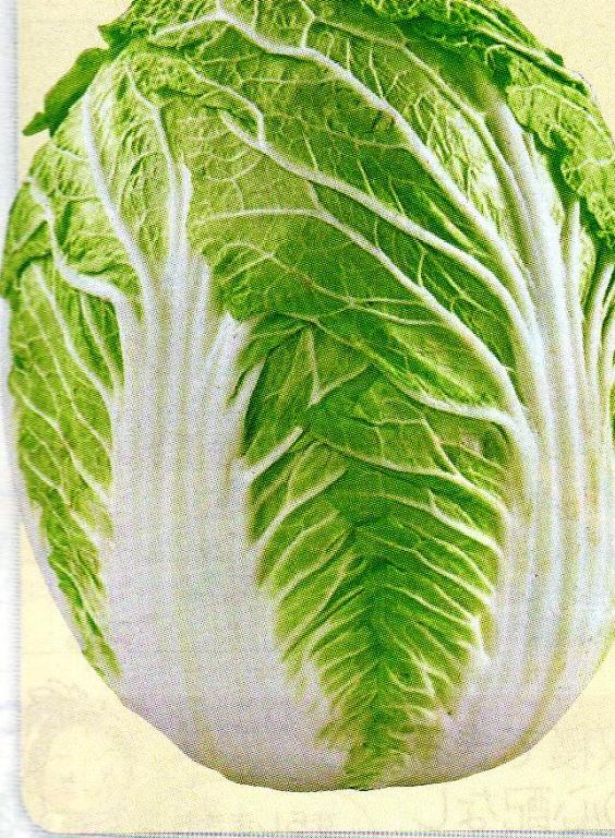 加賀白菜 種