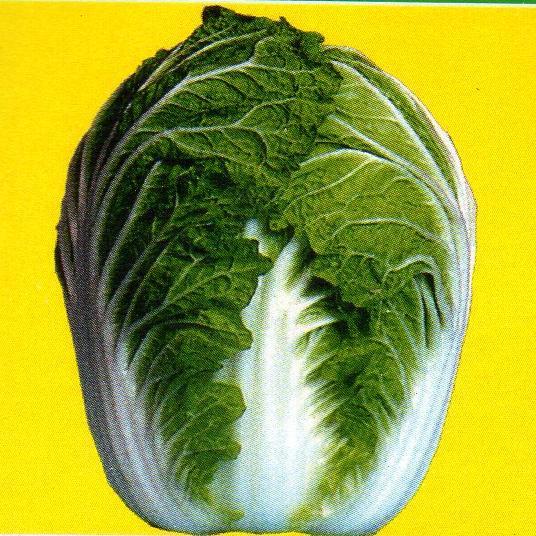 松島純2号白菜 種