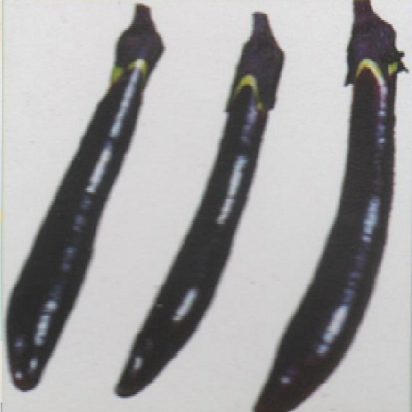 仙台長茄子 種